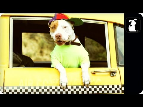 Fresh Pup Of Bel-Air [Parody]