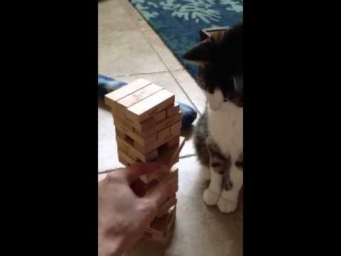 This Cat Knows How To Play Jenga