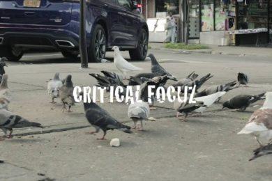 Critical Focuz Feat. Qew Lunel – Roller